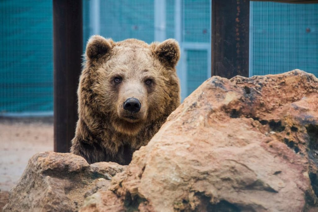 Tonito l'ours